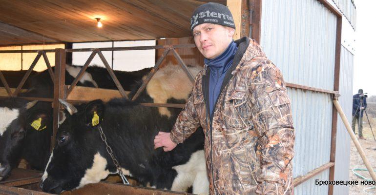 В сельхозпредприятиях района идет зимовка общественного животноводства