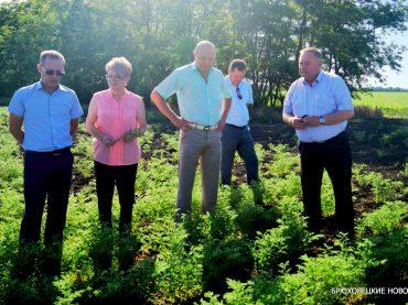 В Брюховецкой будут выращивать грецкий орех, фундук и черешню