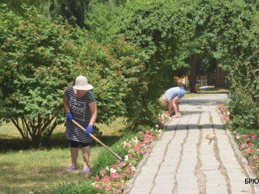В брюховецком парке жители воруют цветы, ломают деревья и ограждения