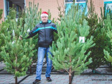 Открылись новогодние ярмарки: где купить елку