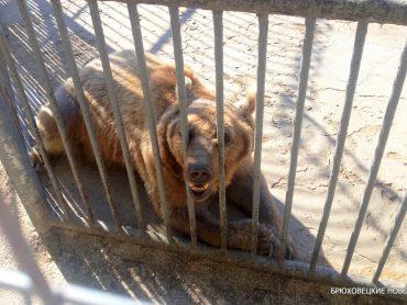 В гости к медведю: история каневского зооцентра