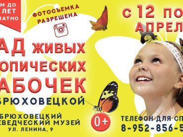 Впервые в станице Брюховецкой тропическое тепло и живые бабочки