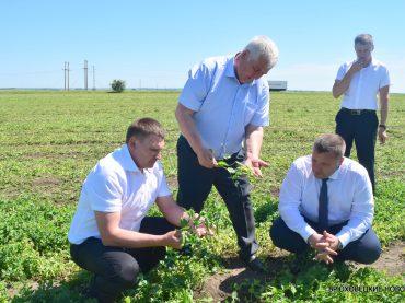 Министр сельского хозяйства Федор Дерека проверил ход уборки зеленого горошка в Брюховецком районе