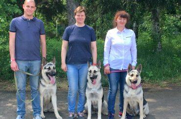 Брюховецким собаководам выделили площадку для дрессировки