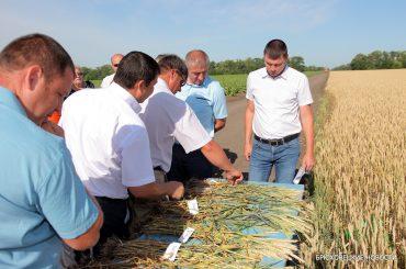 В Брюховецком районе прошел смотр полей зерновых колосовых перед большой уборкой