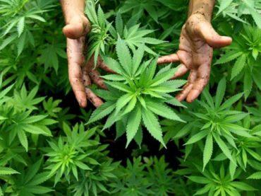Получили наказание за незаконное хранение наркотиков