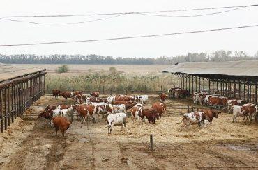 Кубанские фермерские хозяйства успешно конкурируют с крупными агропромышленными предприятиями края — Кондратьев