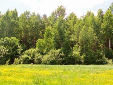 На Кубани в 2019 году на сохранение лесного фонда в рамках профильного нацпроекта выделили больше 100 миллионов рублей