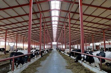 За 5 лет на 150 тысяч тонн выросло производство молока на Кубани