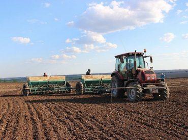 Кондратьев: в 2020 году на Кубани рисом засеют 127 тыс. га с/х земель