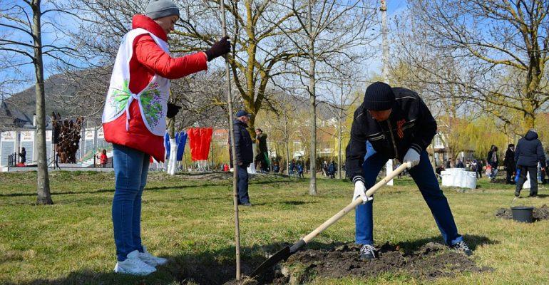 Порядка 70 тысяч деревьев высажено на Кубани в рамках акции «Сад памяти»