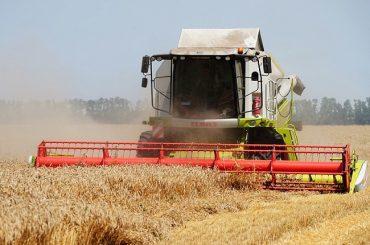 Аграрии Кубани в числе первых в России приступили к уборочной кампании