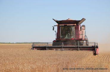 В сельхозпредприятии «Урожай 21 век» хлеб убирают полным ходом
