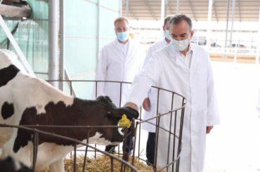 Кондратьев сообщил, со стереотипом о том, что молочное животноводство убыточно, покончено