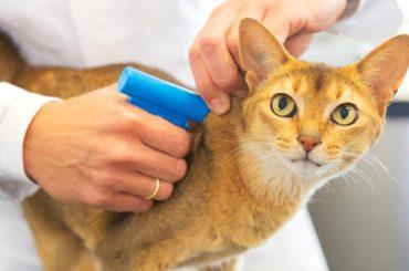Маркировка домашних животных может стать обязательной с 2021 года