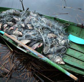 Правоохранители пресекли незаконную добычу рыбы