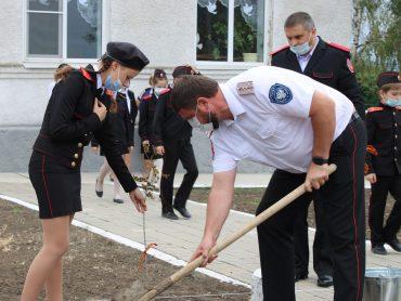 Казачата высадили 20 кленов в память о погибших земляках