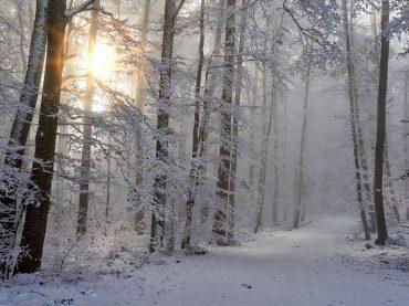 Запасы воды на Кубани после засухи восполнятся после 3-х лет снежных зим