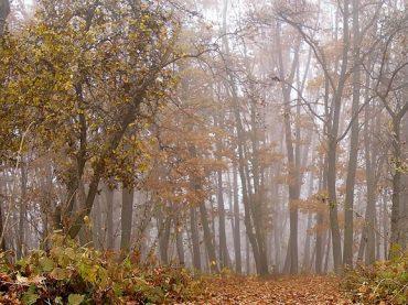 В Краснодарском крае из-за засушливой погоды ввели ограничения для сезона охоты