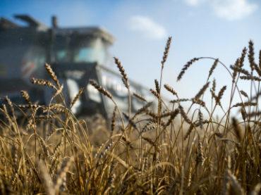 Кубань вошла в число регионов-лидеров России по развитию агрострахования