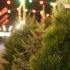 В Брюховецкой открылись ёлочные базары