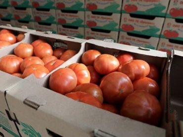 На Кубани в 2020 году производство тепличных овощей увеличилось почти на 20%