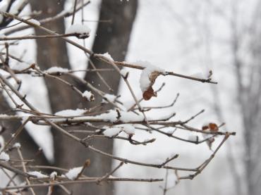 Вслед за морозами на Кубань придет аномальное тепло